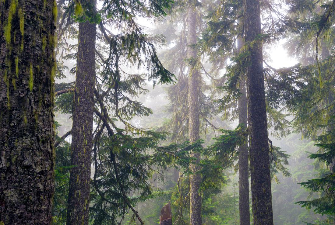 Skyline Divide Trail, Snoqualmie National Forest, Washington State, USA.