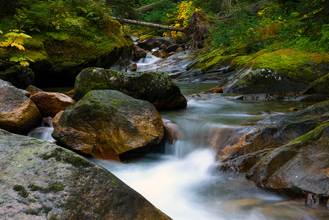 Plentiful Streams