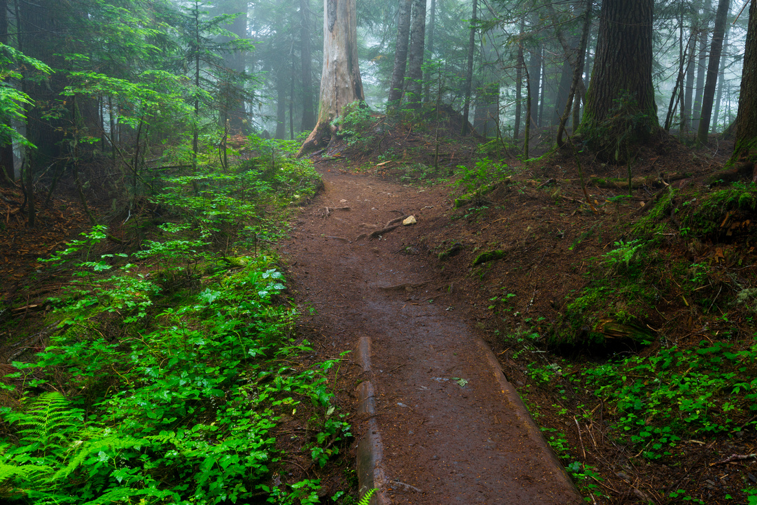 Skyline Divide Trail, Snoqualmie National Forest, Washington State, USA.