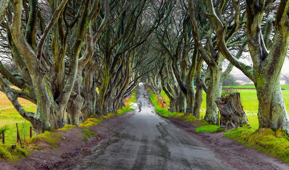 Roads to Sorrow