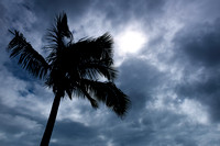 Palm Storms