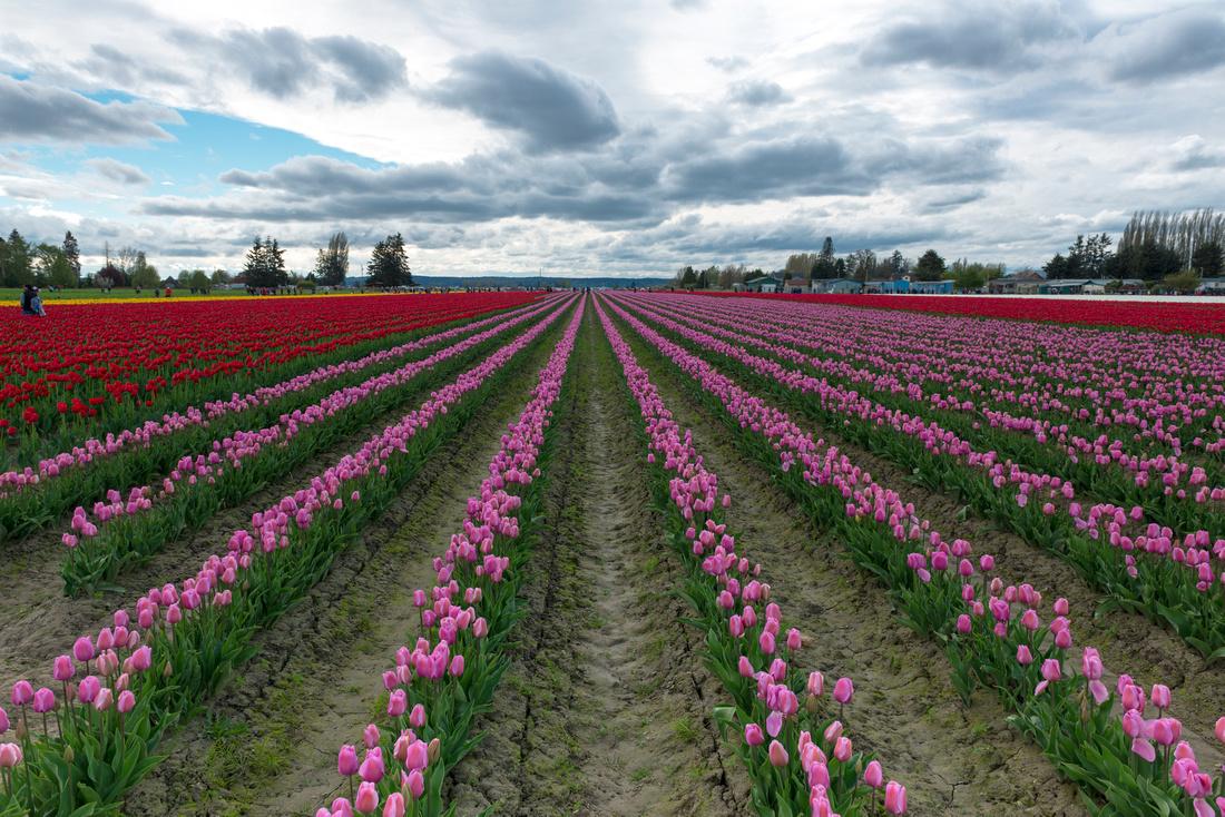 Seasons Fields